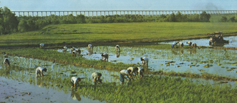 Hunan1977