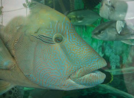 Fish7